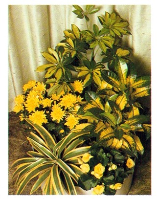 yellow plants