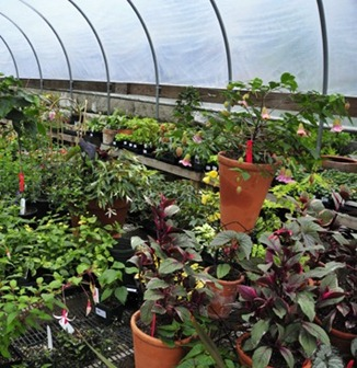 Annuals and Biennials for the Cool Greenhouse