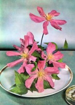 Clematis Arrangements