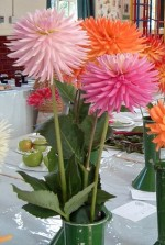 How to Grow And Care For Dahlias