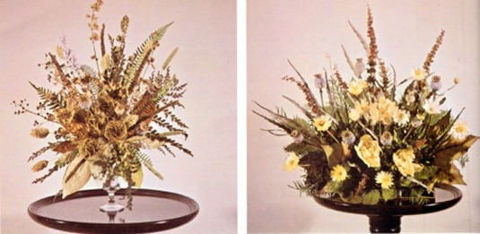 Ferns, Mosses And Lichens For Dried Displays