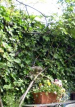 General Care Of Climbing Plants