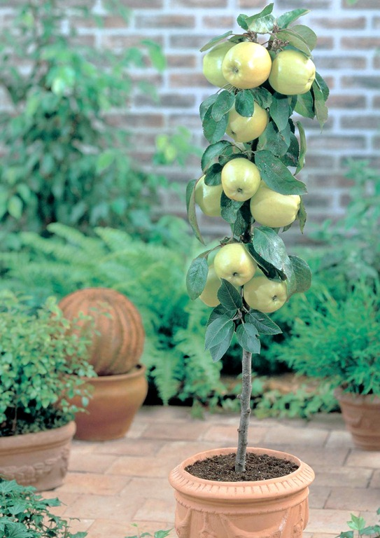 Growing Fruit On The Patio And Small Garden