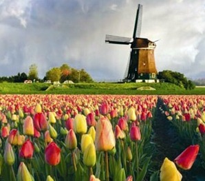 History Of Tulips