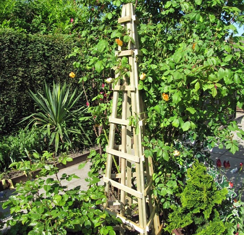how to position climbing plants - Climbing Plants