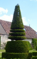 Topiary For The Small Garden