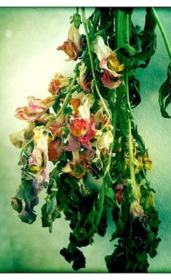 hanging flowers upside down to dry