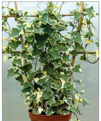 support systems how to grow climbing plants - Climbing Plants