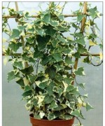 How To Grow Climbing Plants