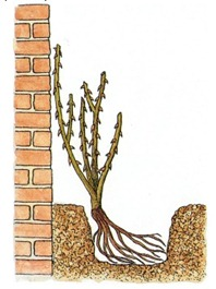 planting against wall