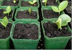 Raising Plants from Seed