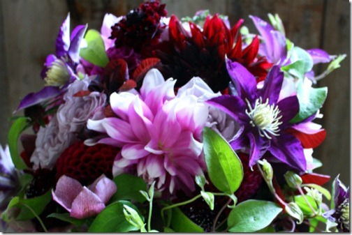 dahlias for cut flowers