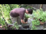 Growing Native Plants And Herbs For Cutting
