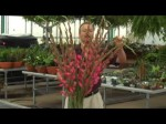 Flower Arranging with Gladioli