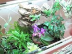 Wardian Cases And Jars For House Plants