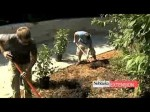 Trees, Shrubs And Climbers For Beginners
