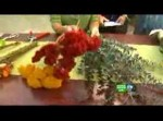 Three Best Ways Of Drying Flowers
