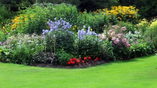 Planting schemes for herbaceous borders for Planting schemes for small gardens