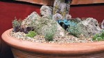 Miniature Rock Gardens