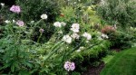 Mixed Beds and Borders
