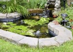 Creating A Miniature Water Garden