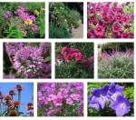 Growing Perennials for Cut Flowers