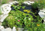 Basic Care Of Aquatic Plants