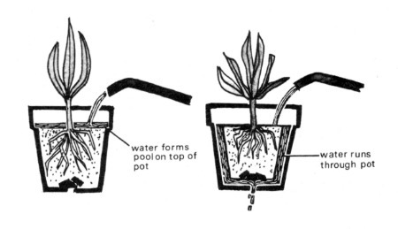 Image Result For Houseplants For
