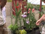 How To Plant Aquatic Plants