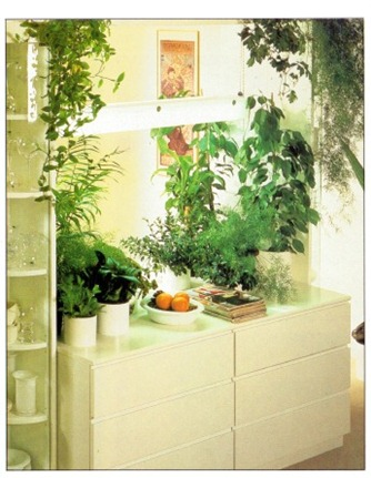 Formal Style House Plant Displays