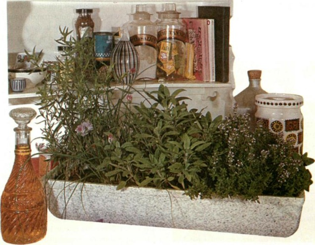The herbs that can be grown indoors