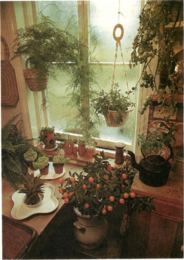 Tomatoes are the easiest of the fruiting vegetables to grow indoors