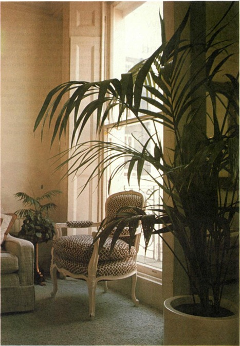 best palms to grow indoors