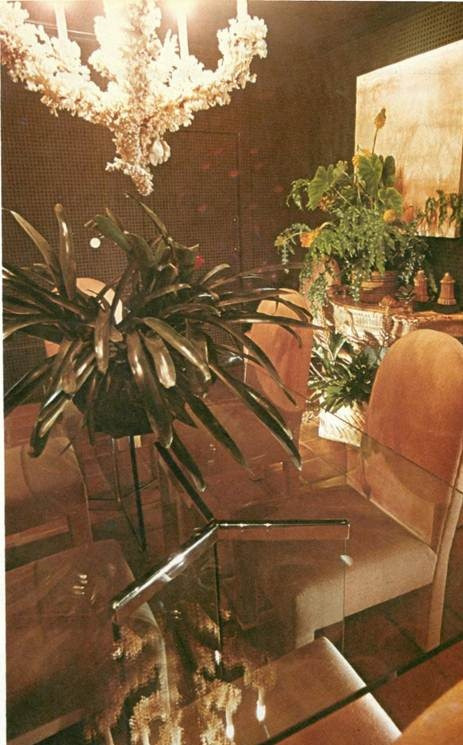 displaying bromeliads in a dining room
