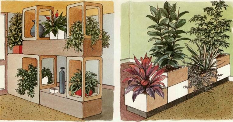 plants as room dividers