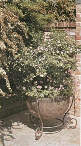 container gardening with climbers