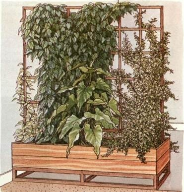 Climbing plants as room dividers