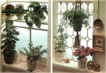 How to Set Up Houseplant Window Displays