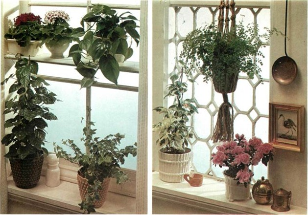 how to set up plants in windows