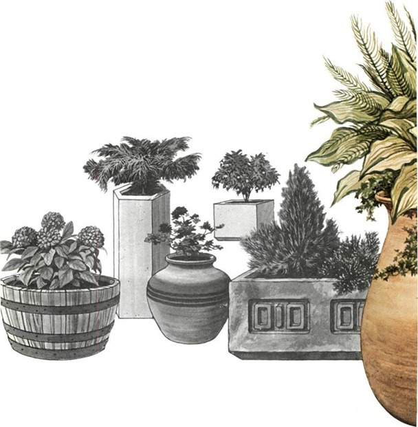 containers for container gardening