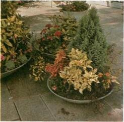 best foliage plants for outdoor containers