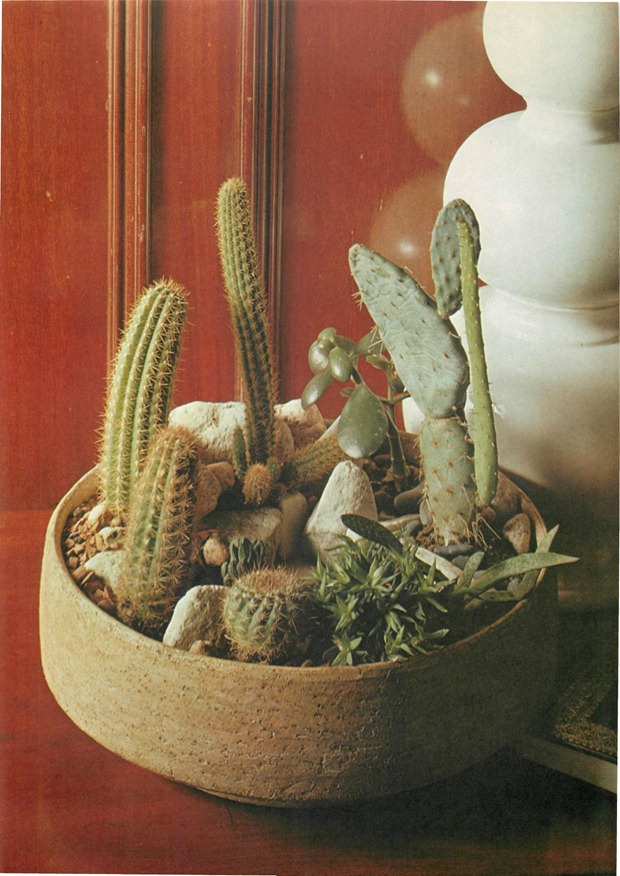 grouping cacti in a bowl