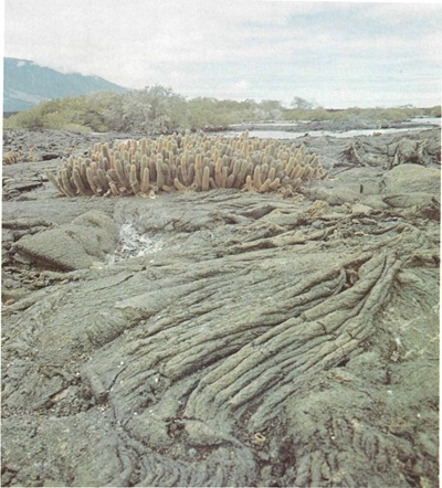 Colonization of volcanic lava Flow