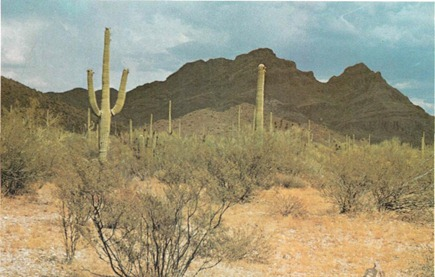 The Saguaro desert community