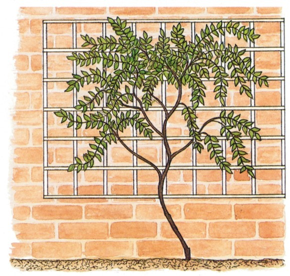 Supporting Climbing Plants